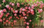 Как определить название цветка