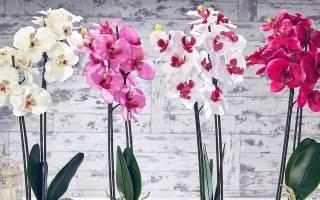 Клещи на орхидеях