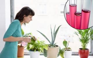 Можно ли поливать марганцовкой комнатные цветы