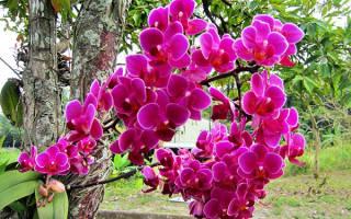 Когда лучше пересаживать орхидею