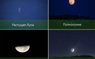 Лунный календарь для растений