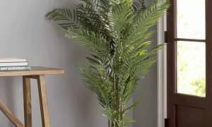 Как обрезать пальму в домашних условиях