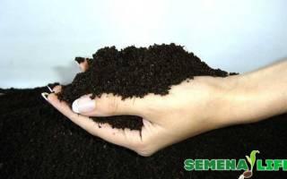 Семена гиацинта
