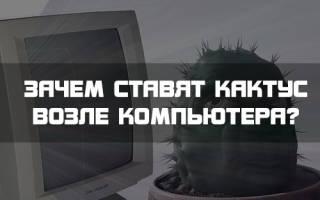Кактус у компьютера зачем