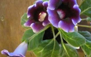Комнатные цветы из семян