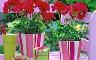 Йод для герани для цветения