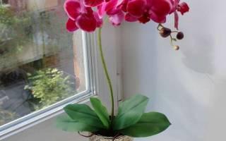 Если залили орхидею что делать