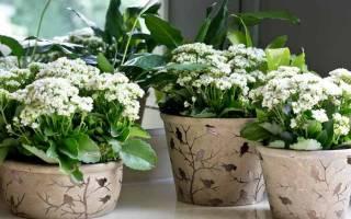 Как выращивать комнатные цветы
