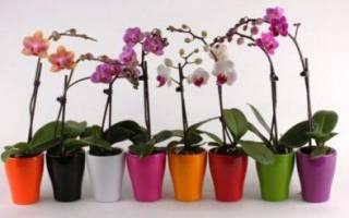 Подкормка орхидей во время цветения