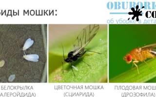 Дихлофос от мошек