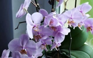 Как ухаживать за орхидеей когда она отцвела