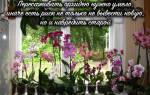 Как развести орхидею