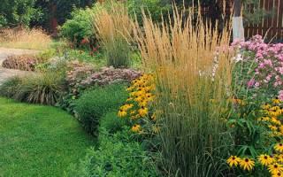 Садовые декоративные растения