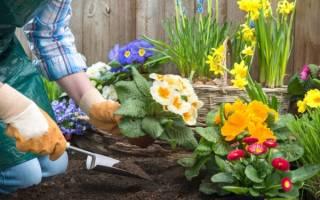 Какими цветами украсить приусадебный участок садовода-любителя