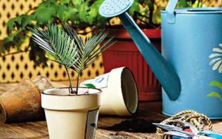 Уход за комнатными растениями в домашних условиях