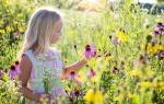 Желтые полевые цветы