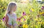 Полевой желтый цветок