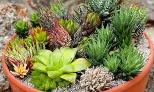 Домашние растения нашей планеты