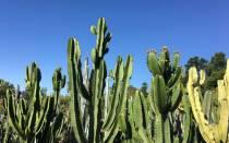 Имена для кактусов