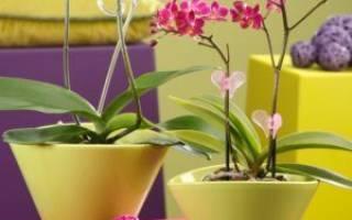 Можно ли посадить орхидею в непрозрачный горшок