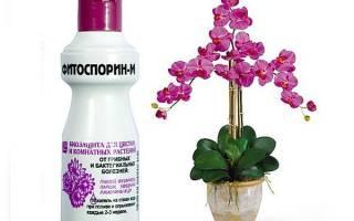 Фитоспорин для орхидей секреты спасения