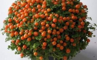 Цветок с оранжевыми ягодами