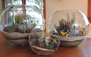 Цветы в аквариуме