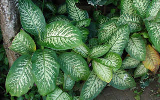 Комнатные растения вредные для дома