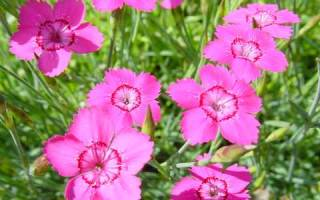 Часики цветы
