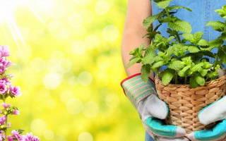 Как пересадить комнатные цветы в домашних условиях