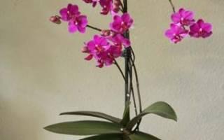 Какой грунт для орхидей лучше