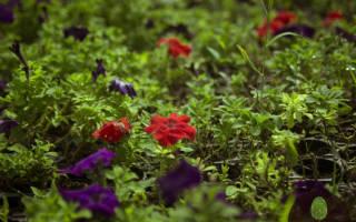 Однолетние и многолетние растения