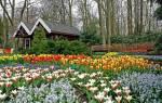 Голландия парк кекенхоф