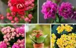 Красивые комнатные растения