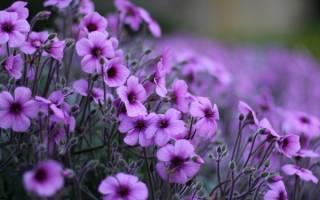 Как называются фиолетовые цветы