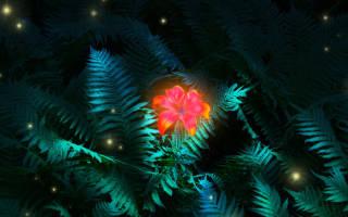 Как найти цветок папоротника