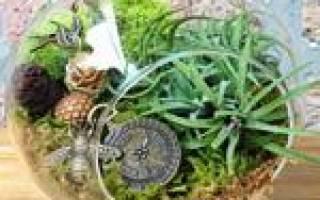 Цветы для флорариума