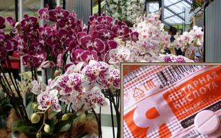 Как разводить янтарную кислоту для орхидей