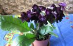 Маленькие комнатные растения