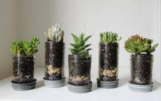Что такое дренаж для комнатных растений