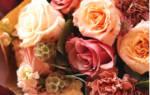 Блюм цветы