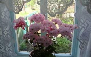 Вонючий домашний цветок