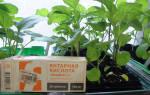 Янтарная кислота инструкция по применению в цветоводстве