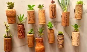Пробковые емкости для карликовых кактусов своими руками