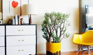 Неприхотливые цветы для квартиры