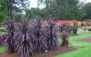 Ложная пальма