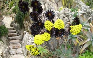 Цветы суккулентные