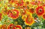 Виды садовых цветов