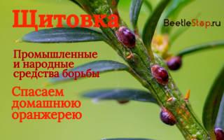 Средство от щитовки на комнатных растениях