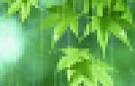 Пеларгония carmen andrea